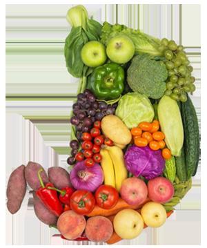 Magen gefüllt mit Obst und Gemüse